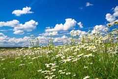 Summer rural landscape with the blue sky Stock Photography