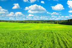 Summer rural landscape with the blue sky, clouds and field Royalty Free Stock Photos