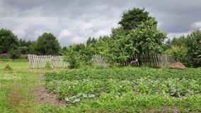 Summer rural landscape stock video