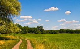Summer rural landscape Royalty Free Stock Photo