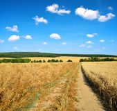 Summer rural landscape with dirt road and blue sky. Stock Photography