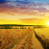 Summer rural landscape with dirt road at sunset. Royalty Free Stock Photo