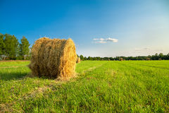 Summer rural landscape with a field and hay Stock Image
