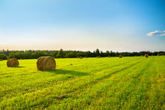 Summer rural landscape with a field and hay Stock Images