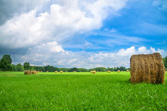 Summer rural landscape with a field and hay Stock Photos