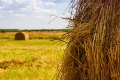 Ranches of hay in a meadow Stock Images