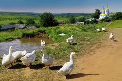 Summer rural landscape geese pond in the distance, the Orthodox. Church of Russia Stock Photography