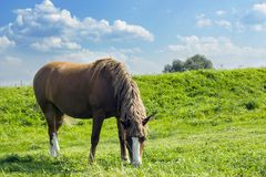 Summer rural landscape with grazing horse on green pasture stock photos