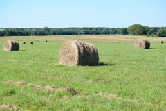 Summer rural landscape with hay rolls on a green meadow Stock Photo