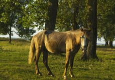 Summer rural landscape with horse in green meadow Stock Photo