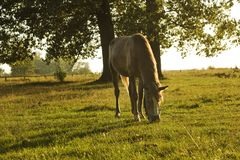 Summer rural landscape with horse in green meadow Royalty Free Stock Photos