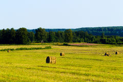Summer rural landscape with a mown grass and hay rolls Royalty Free Stock Images