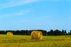 Summer rural landscape with a mown grass and hay rolls Royalty Free Stock Photo