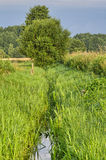 Summer rural landscape with trees, meadow and brook Royalty Free Stock Image
