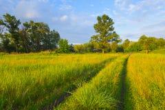 Summer rural scene Royalty Free Stock Image
