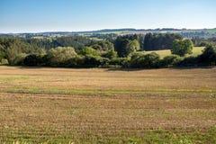 Summer rural summer landscape Stock Image