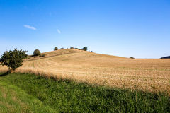Summer rural summer landscape Royalty Free Stock Image