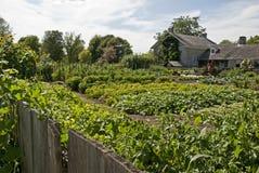 Summer Rural Vegetable Garden Stock Photos