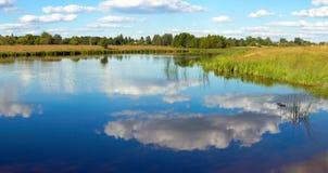 Summer rushy lake Royalty Free Stock Photos