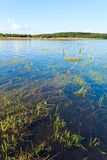 Summer rushy lake. View with some plants on water surface stock image