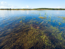 Summer rushy lake. View with some plants on water surface royalty free stock photo