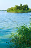 Summer rushy lake Stock Photography