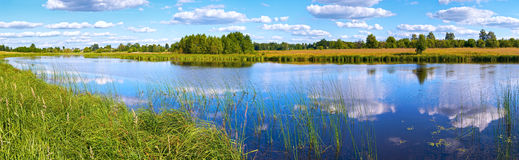 Summer rushy lake panorama Stock Image