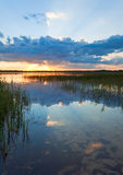 Summer rushy lake sunset view Royalty Free Stock Photography