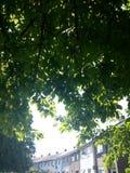 Summer& x27; s绿色礼物 免版税库存照片