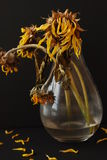 Summer's End. Here is a picture of a vase full of sunflowers that have dried up and wilted Stock Photos