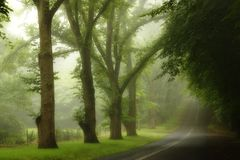 Summer's Rain in Blue Mountains Royalty Free Stock Photos
