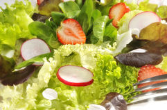 Summer salad Royalty Free Stock Photography