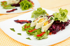 Summer salad with calamari Royalty Free Stock Photo