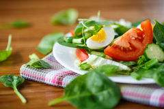 Summer salad with egg Stock Image