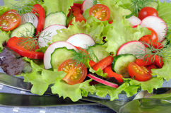 Summer salad of fresh vegetables Royalty Free Stock Image