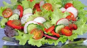 Summer salad of fresh vegetables Royalty Free Stock Photography