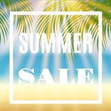 Summer sale background with palm and sun. Stock Photos