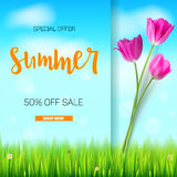 Summer sale banner. Stylish advertisement text poster on blue summer sky backdrop with white clouds, green, lush grass. Daisies and ladybugs. Template mock-up Royalty Free Stock Images