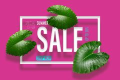 Summer sale banner with tropical green leaves background. Exotic Stock Image