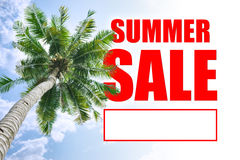 Summer sale. Coconut tree and summer sale sign Stock Images