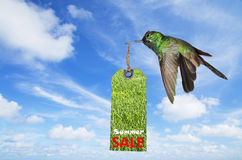 Summer sale concept Royalty Free Stock Images