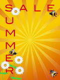 Summer Sale Sign Daisies Flowers And Bumble Bees Royalty Free Stock Photography