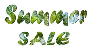 Summer Sale text sign. On tropical green leaves and blue sky background royalty free stock image
