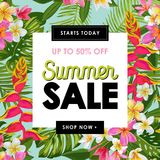Summer Sale Tropical Banner. Seasonal Promotion with Plumeria Flowers and Palm Leaves. Floral Discount Template Design Stock Image