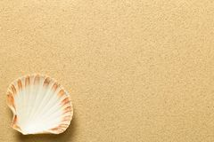 Summer, Sand Background with Shell. Beach texture. Copy space. Top view Stock Photo