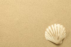 Summer, Sand Background with Shell. Beach texture. Copy space. Top view Stock Image