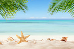 Summer sandy beach with blur ocean on background Stock Photography