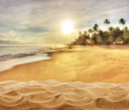 Summer sandy beach with palm trees Royalty Free Stock Image