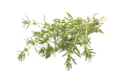 Summer savory Stock Image
