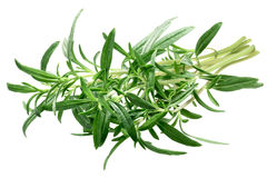 Summer savory Satureja hortensis bundle, paths. Bundle of Summer Savory Satureja hortensis, fresh. Clipping path royalty free stock photos